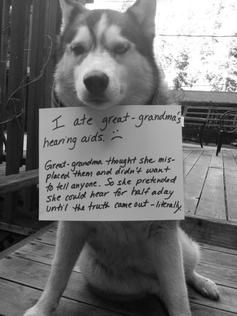 The Best Dog Shaming All Time Funny & cool