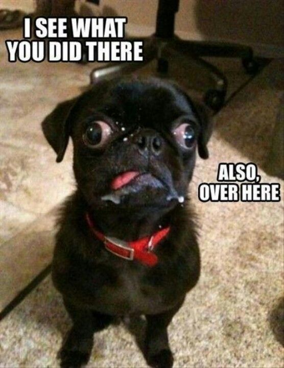 Poor Newty and his lazy eye Haha Funny Funny Dogs Funny Cute Funny