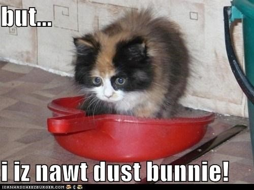 cat clean dust dust bunny cat spring cleaning