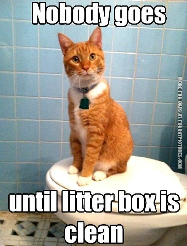 How To Clean Cat Litter Box funny stuff Pinterest