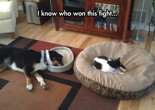 funny dog cat bed sleeping wrong
