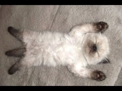 FUNNY Owner trying to Wake up Sleeping Cats – Cute Cat Videos Ever