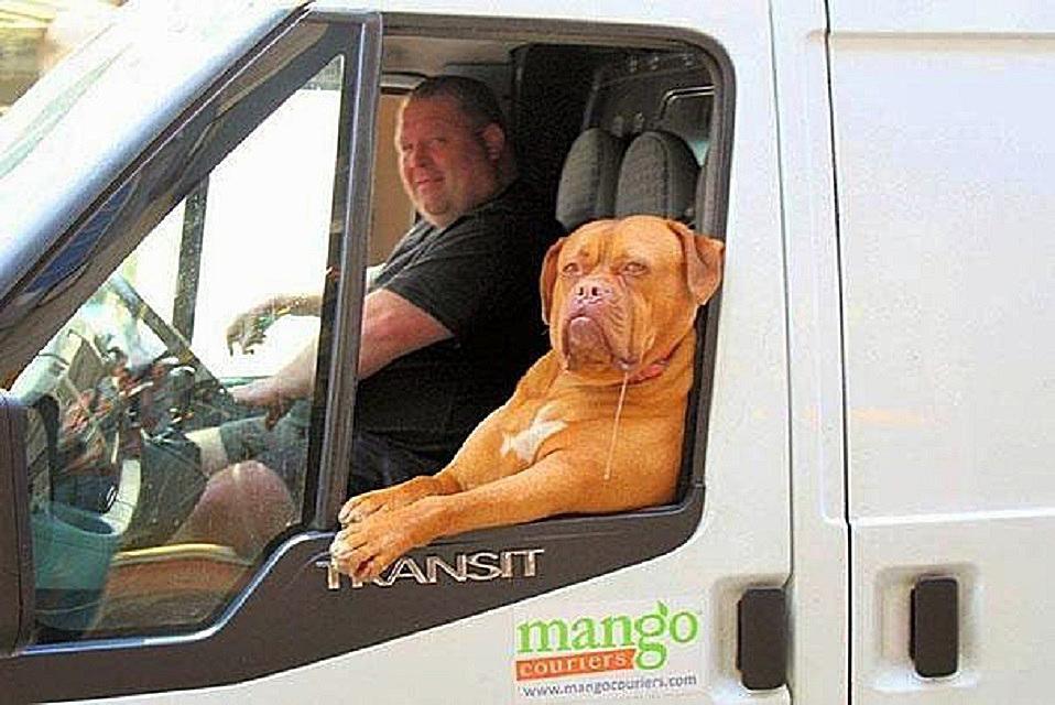 dog truck2 58b8a9f03df78c353ce