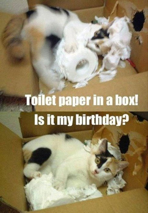 birthday meme of cat enjoying toilet paper in a box then realizing it is also his