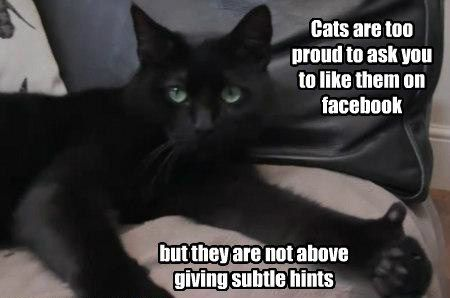 Cats funny thumbs up proud