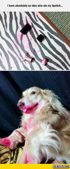 Solving This Case Is Not Going To Be Easy Bad Lipstick MemeThat s HilariousCrazy Funny Funny Animal