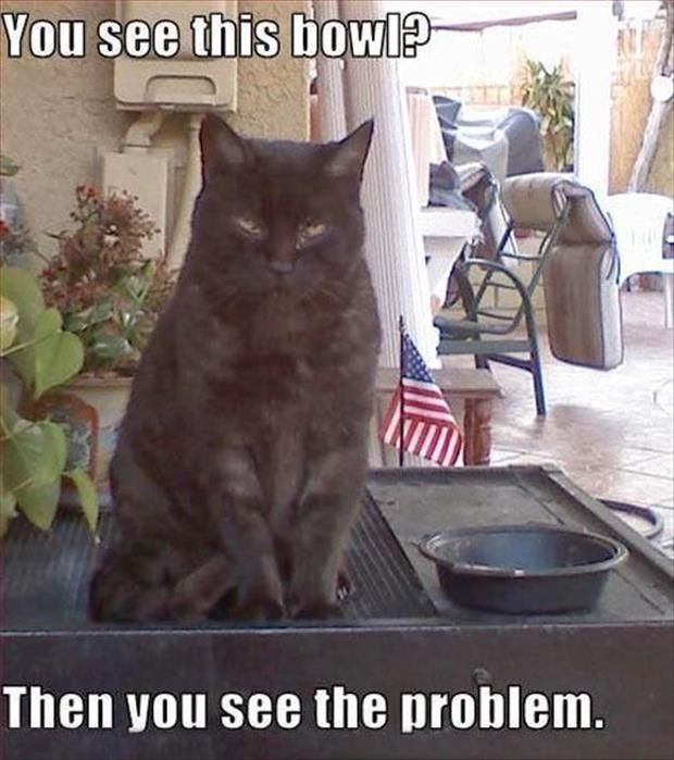 Mad Cat With Captions