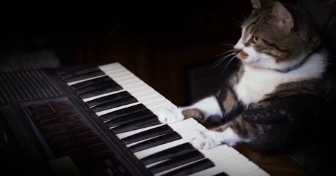 funny cat plays keyboard organ footage iconl