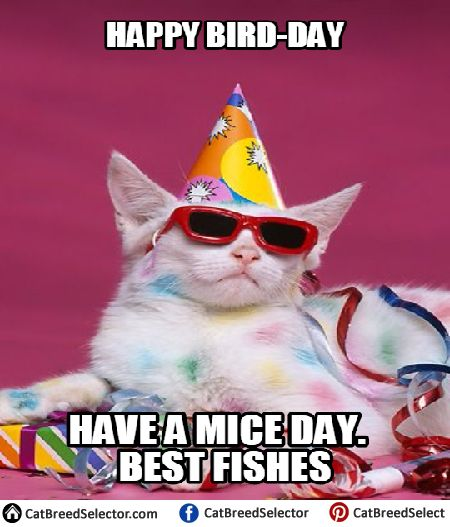 Happy Birthday Cat Memes Funny