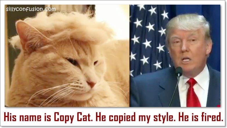 donald trump hair funny meme donald trump hair cat lookalike