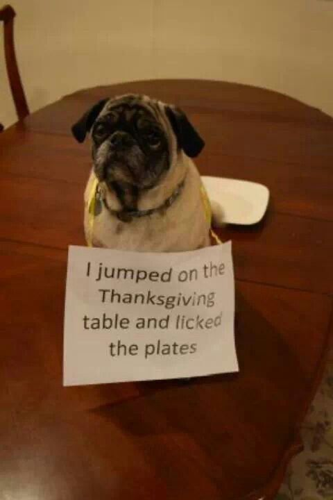 Grab Hold Of the Prodigious Funny Dog Pictures Thanksgiving