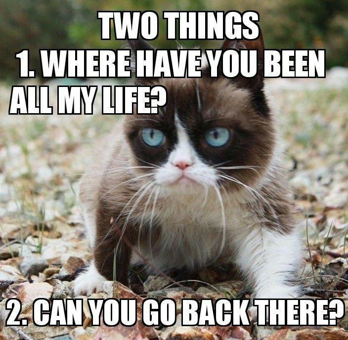 Funny Grumpy Cat Memes Funny Animal Memes Dog Memes Funny Animal