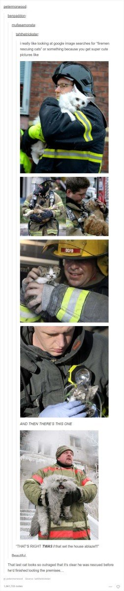 Grab Hold Of the Prodigious Tumblr Funny Cat Pictures