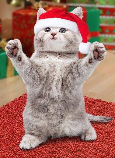 Cat Hug xmas cover