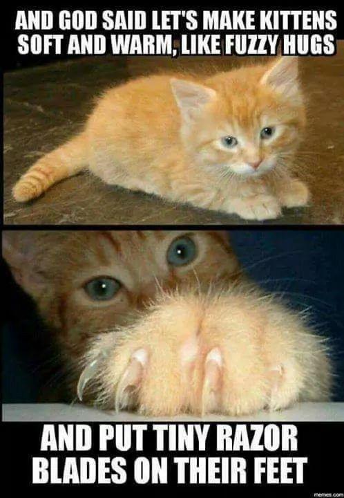 Mignon Funny Pets Funny Animal Memes Cute Funny Animals Animal Funnies