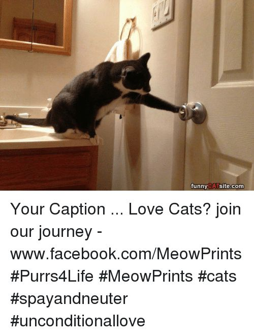 Journey Memes and Captioned funny CAT site Your Caption