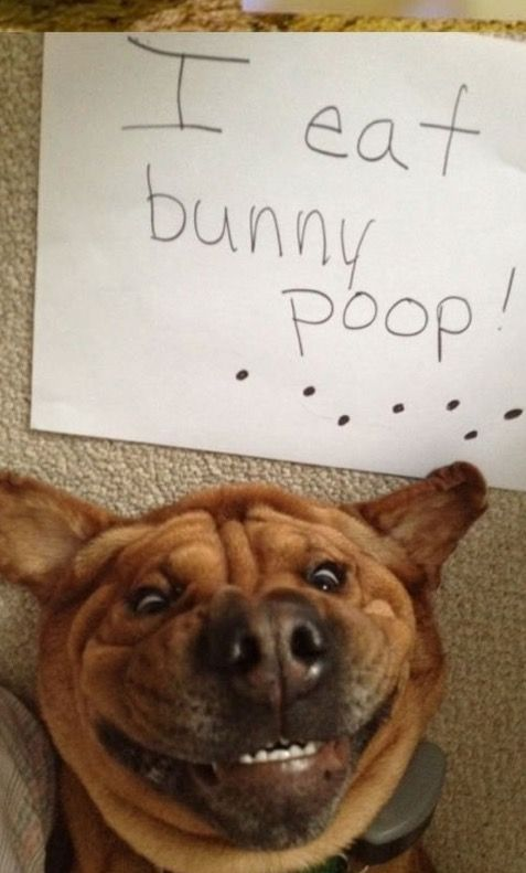 Explore Derp Dogs Animal Funnies and more
