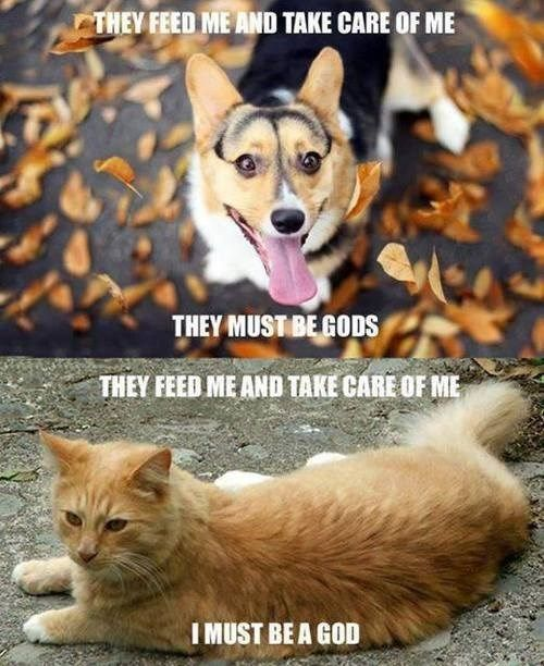 dogs cats vs dogs parison Cats funny