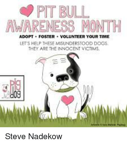 Dogs Memes and Help PIT BULL AWARENESS MONTH ADOPT FOSTER VOLUNTEER YOUR TIME