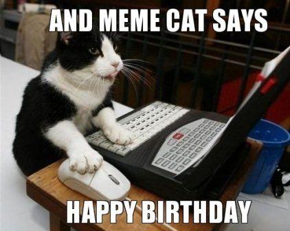 and meme cat says happy birthday