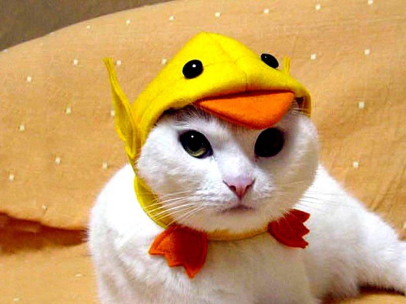 Halloween Cat Costume Cute Funny