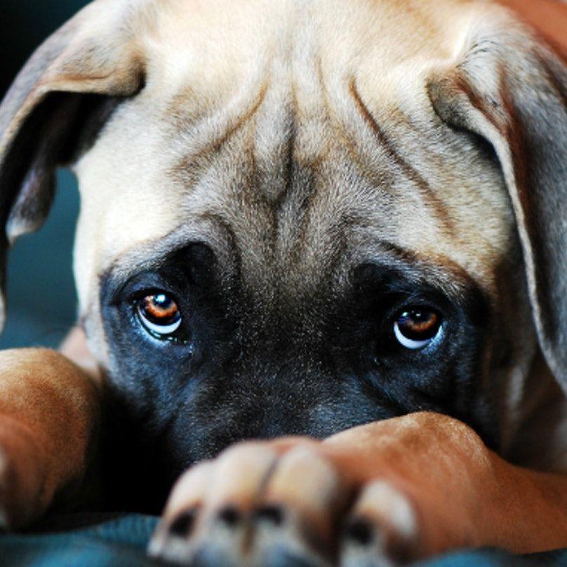 puppy dogs eyesFEAT