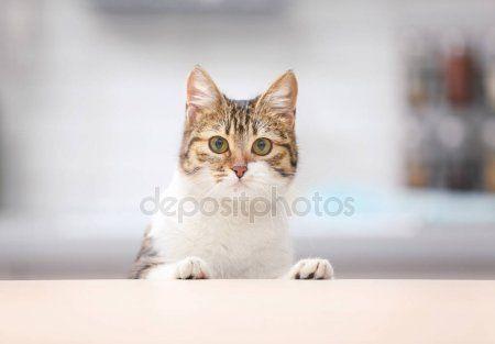 Cute funny cat — Stock