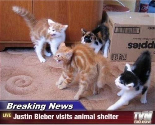 Justin Bieber visits an animal shelter