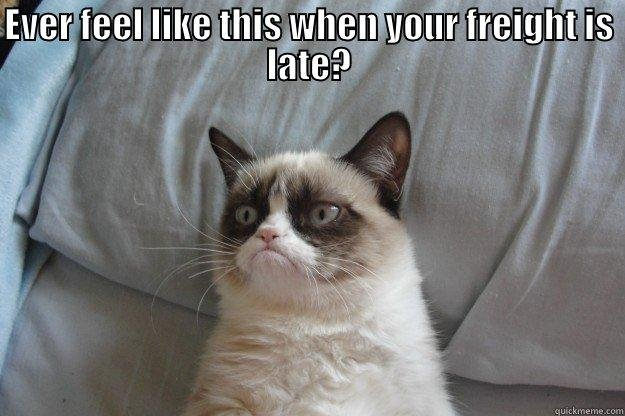 Funny Cat work meme EVER FEEL LIKE THIS WHEN YOUR FREIGHT IS LATE Grumpy