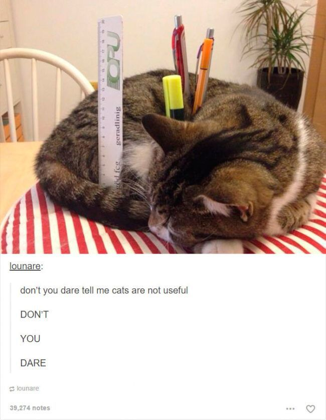 Explore Funny Cats Funny Animals and more