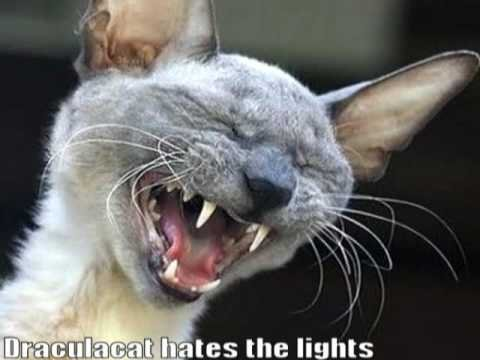 Very Funny Cats 52