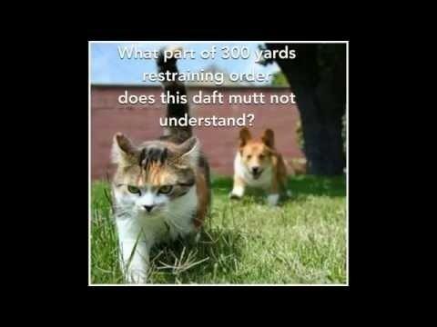 Funny Cat Memes Youtube eeacefdeefeec