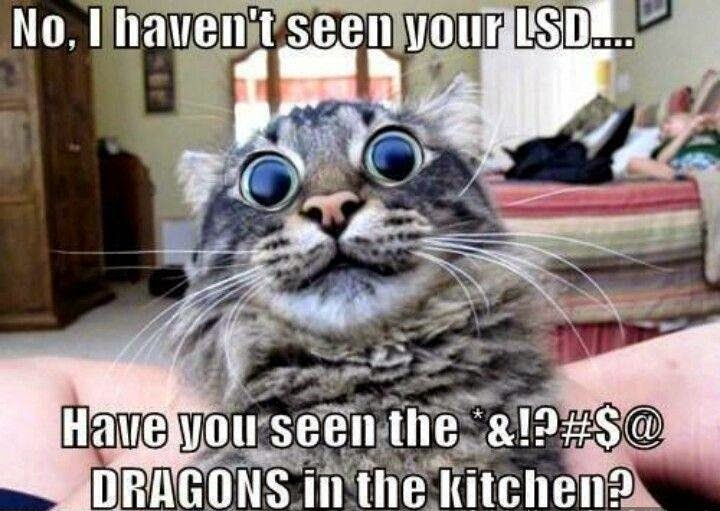 No I haven t seen your LSD have you seen the Dragons in the kitchen
