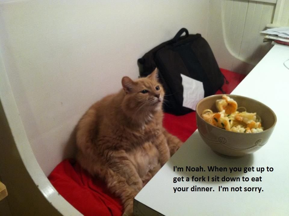 The best of cat shaming Part 7 FB TroublemakersFB Troublemakers on imgfave Cute cat They are sneaky