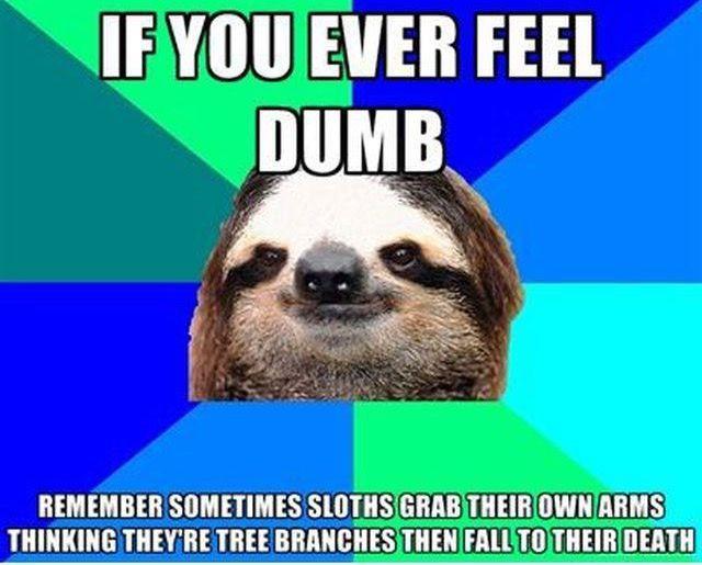 Animal · Sloth MemesFunny