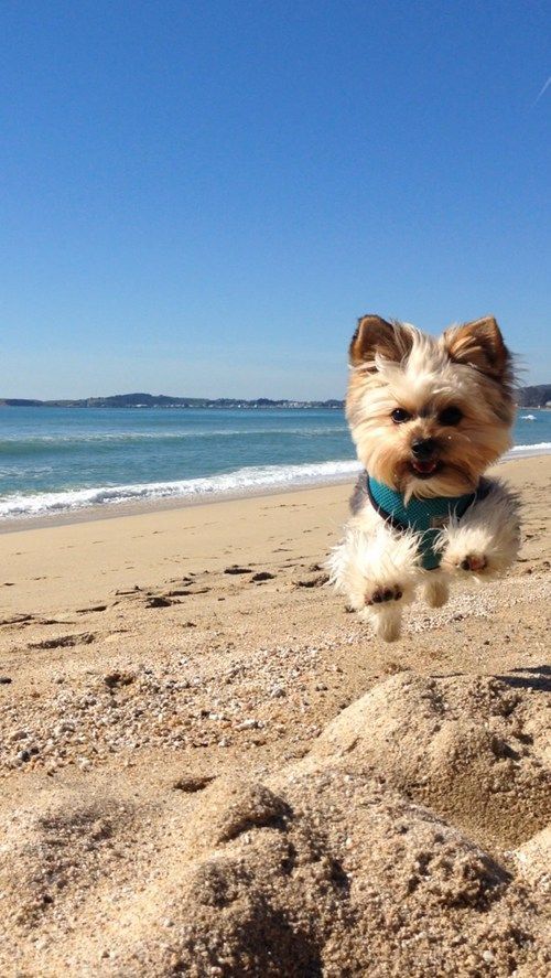 dog beach and cute image