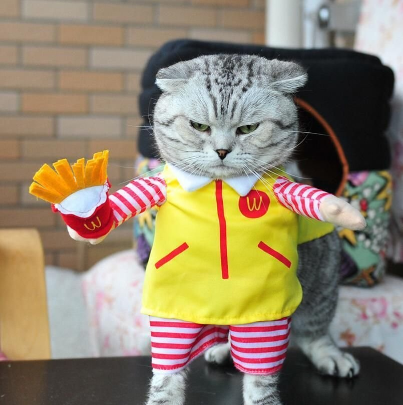 Funny Cat Outfit