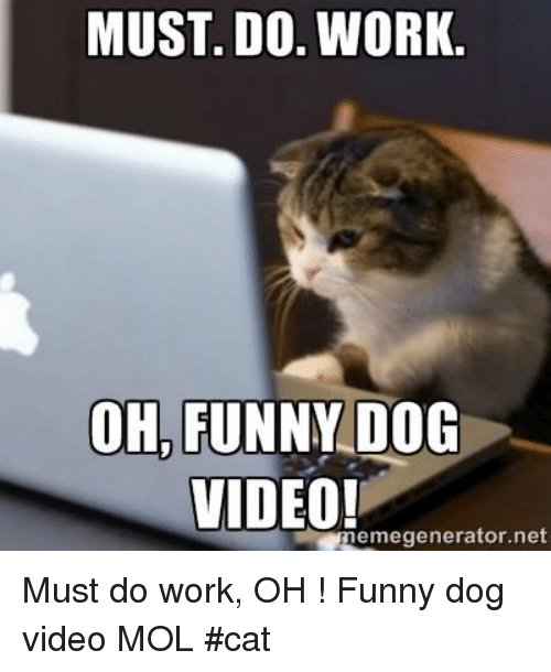 Funny Memes and Work MUST DO WORK OH FUNNY DOG VIDEO