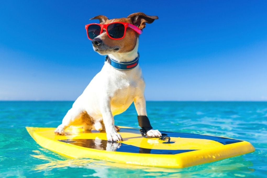 Florida goes to the dogs in the Hang 20 Surf Dog Classic in Jupiter Beach