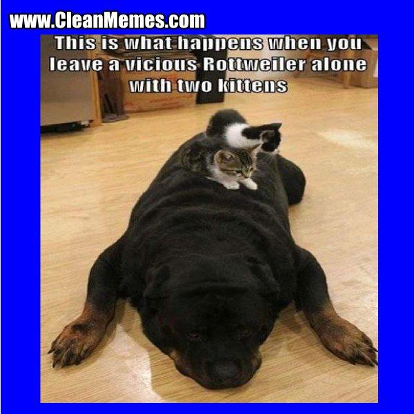 Clean Funny Dog Memes ideas