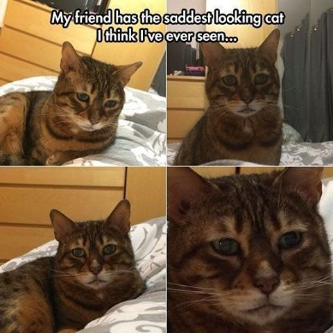cute sad aw depression funny pet lmfao cats animal memes adorable meme pets kittens aww haha kitty grumpycat a kitten sadface animals lmao