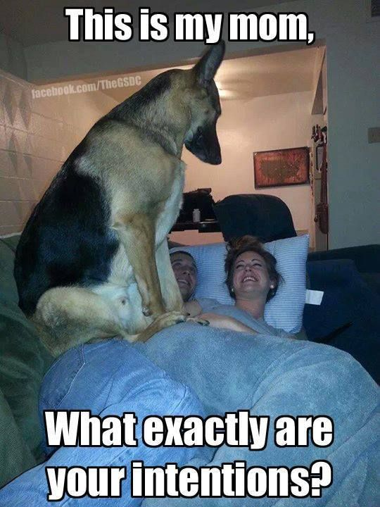 Hahaha this reminds me of Trago and Christopher the first year of our relationship AWW ANIMALS VIDEOS → Pinterest