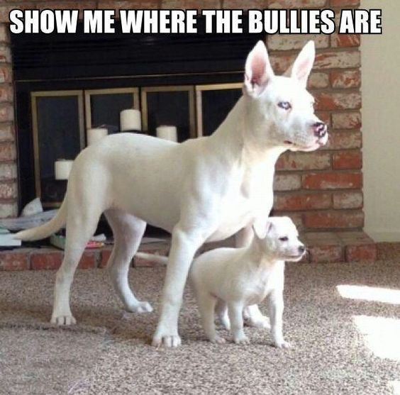 Funny Dogs with Captions