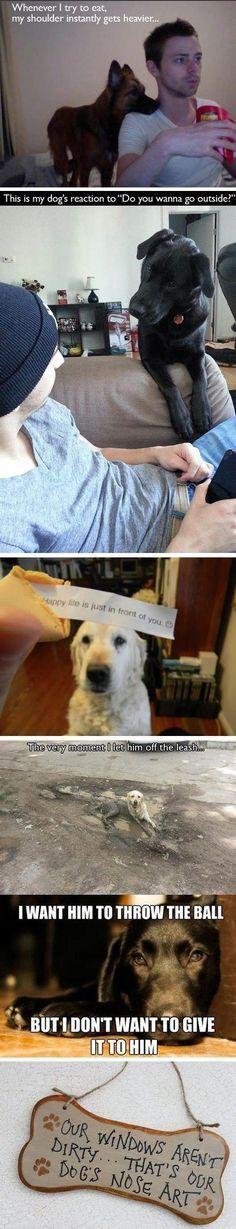 Funny Dogs Meme