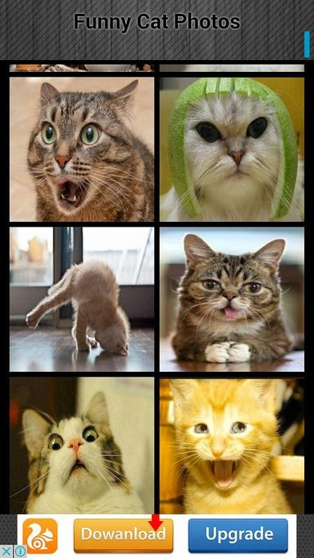 Funny Cat s poster
