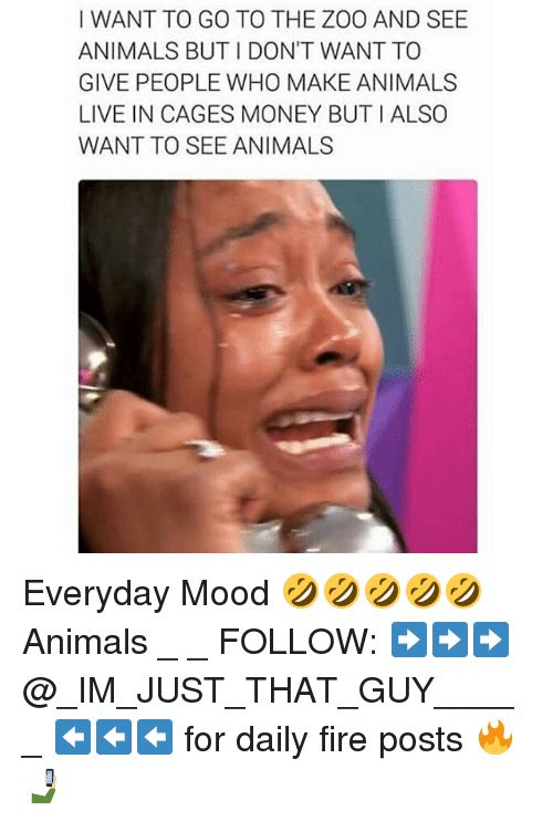 Animals Fire and Memes I WANT TO GO TO THE ZOO AND SEE