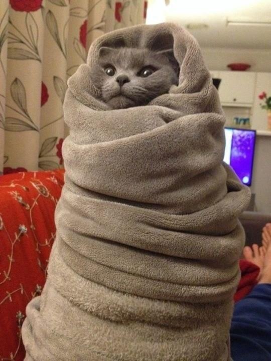 funny cat after bath