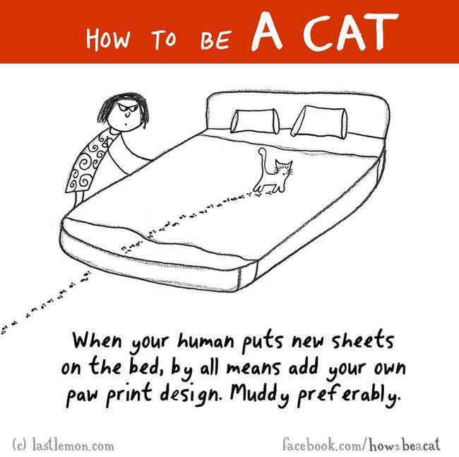23 funny cat drawings