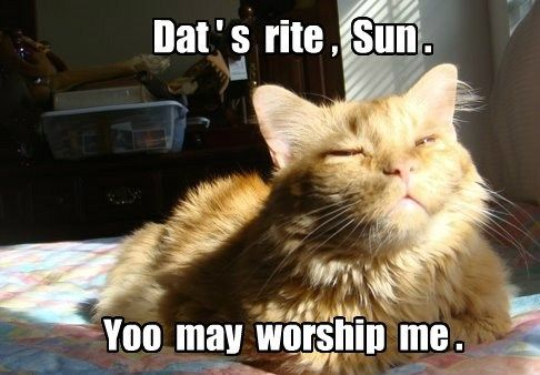 Grab Hold Of the Wonderful Funny Cat Memes Sun