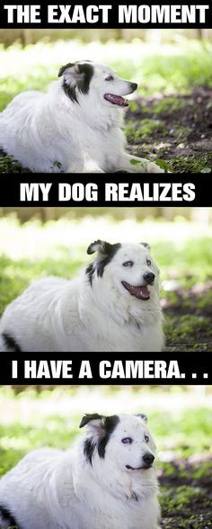 Page 2 of 2817 Funny pictures and memes of dogs doing and implying things If you thought you couldn t possible love dogs anymore this might prove you